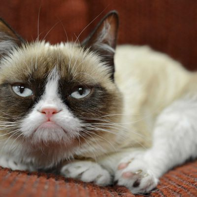 https://www.myskirtingboards.co.uk/wp-content/uploads/2017/05/grumpy-cat-has-earned-her-owner-nearly-100-million-in-just-2-years-400x400.jpg